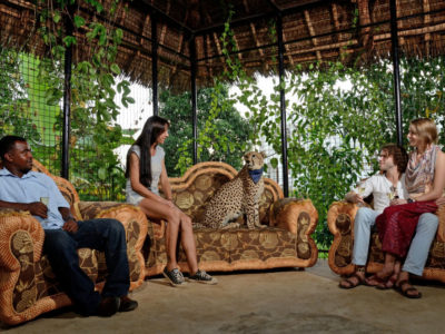 Zanzibar's Cheetah's Rock a unique place for animals? Not quite say conservationists